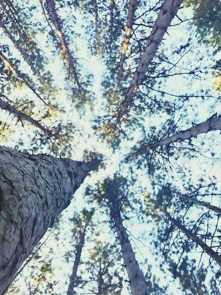 Take me back to the forest Views Forest Photography Electric Forest Tree Tree Trunk Trunk Beauty In Nature Nature Forest Scenics - Nature Sky