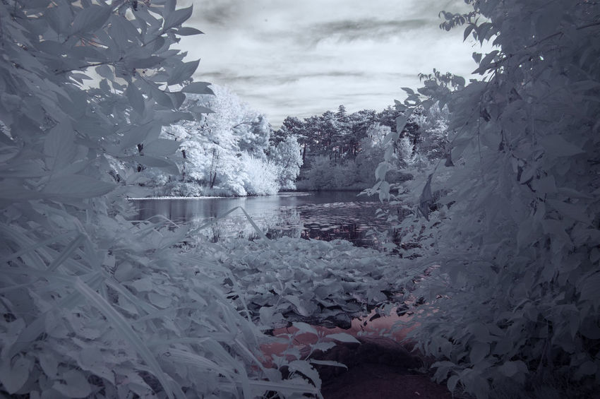 Cloud - Sky Clouds And Sky Copenhagen Day Denmark Forest Infrared Infrared Photography Lake Leaf Nature Nature Nature Photography No People Outdoors Park Scenics Sky Tranquility Tree Tree Water White Winter Woods