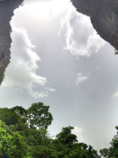 Tree Cloud - Sky Sky Plant Low Angle View Growth Nature No People Beauty In Nature Tranquil Scene Outdoors Scenics - Nature Green Color Sunlight Forest Land Tranquility Idyllic Day