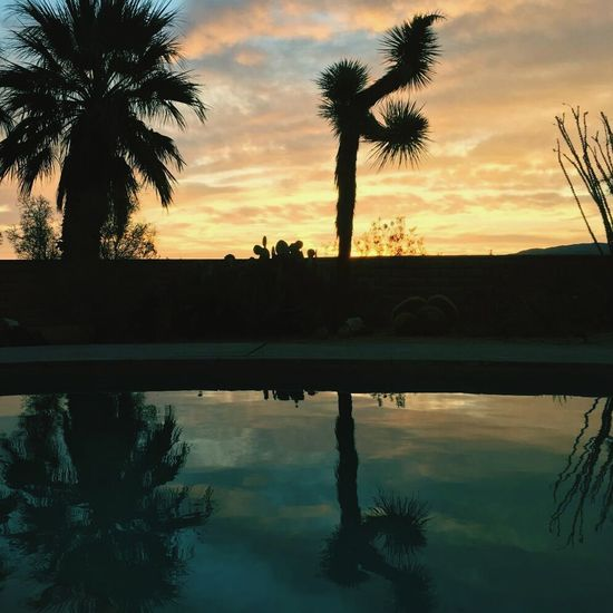 Tree Peace And Quiet Lifeisfinein29 Vibrant Color Clouds Cloudjunky Tranquility Palm Tree Joshua Tree Sunrise Reflection Reflection_collection