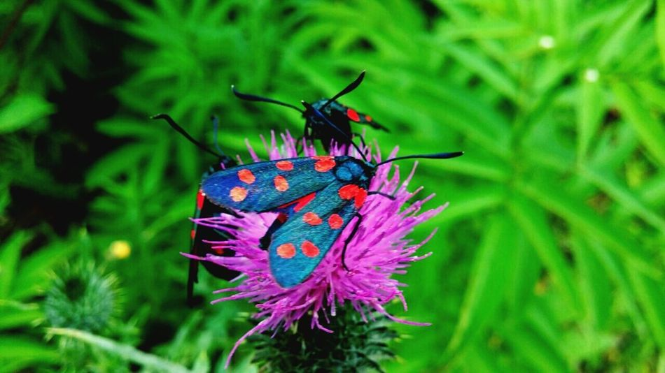 They are really beautiful. AMAZING 😮😍 Insect Outdoors Black Red Green Animal Love Taking Photos Check This Out Nature