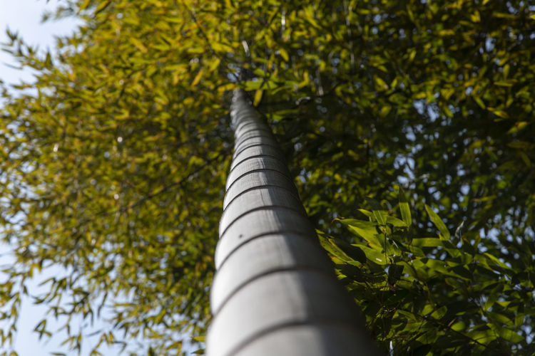 bamboo forest at Gwangyang Cheongmaesil Maeul in Jeonnam, South Korea Bamboo Gwangyang Plant Tree Nature Day Growth Outdoors Low Angle View No People Green Color Leaf Plant Part Branch Selective Focus Beauty In Nature Sunlight Focus On Foreground Architecture Sky Close-up Tree Trunk