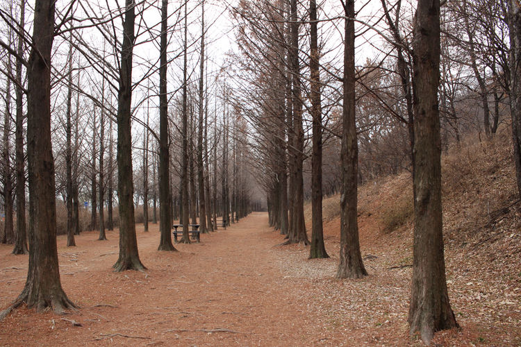 Bare trees in forest during autumn
