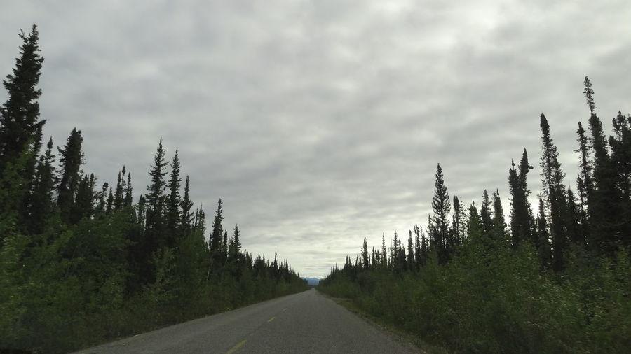 Canada Day Dempster Highway Nature No People Outdoors Road Sky The Way Forward Transportation Tree Yukon Yukon Territory