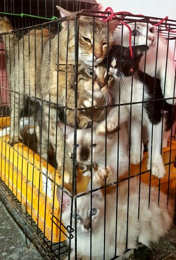 Kittens Cats Crowded Cute Mammals Animal Pets Trapped Cage Animals In Captivity Livestock Captivity Confined Space