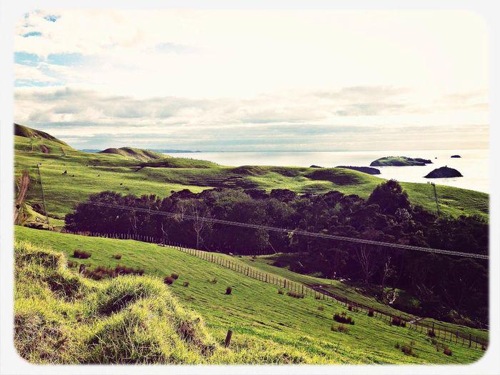 [a:18300] Newzealand