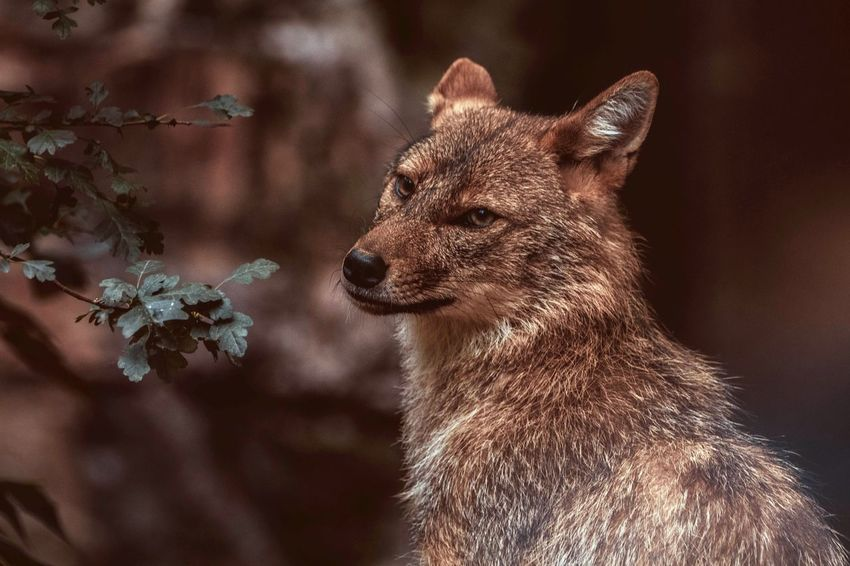 EyeEm Selects Animals In The Wild One Animal Animal Themes Animal Wildlife No People Focus On Foreground Outdoors Naturelovers Outdoor Photography Wild Animal Head  Animals In The Wild Animal Photography Nature Photography Close-up Portrait Fox The Week On EyeEm