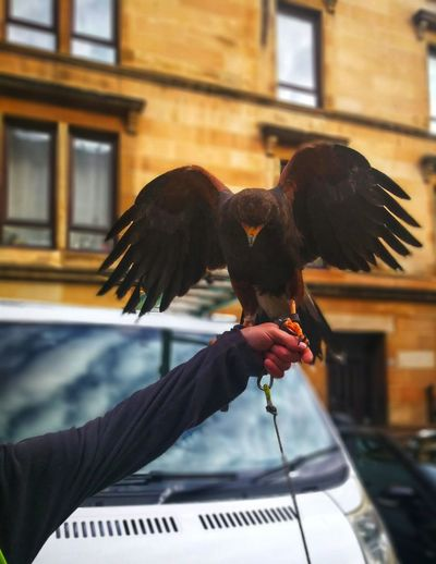 Full length of hand holding a working bird