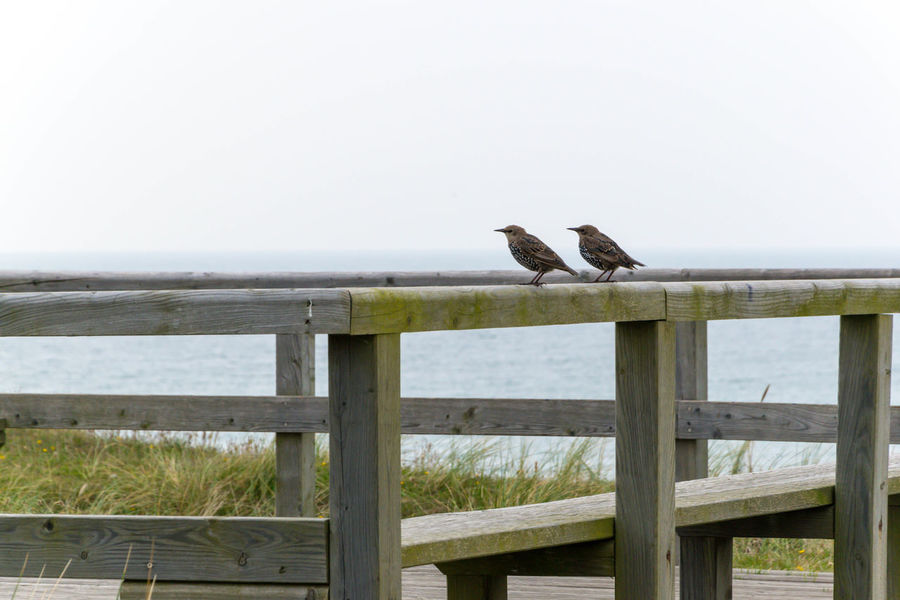 Animal Themes Animal Wildlife Animals In The Wild Bird Day Horizon Over Water Nature No People Outdoors Railing Sea Two Birds Water Wood - Material