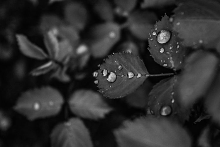 The droplets