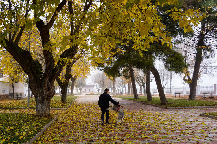 Rear view of people walking on footpath in park during autumn