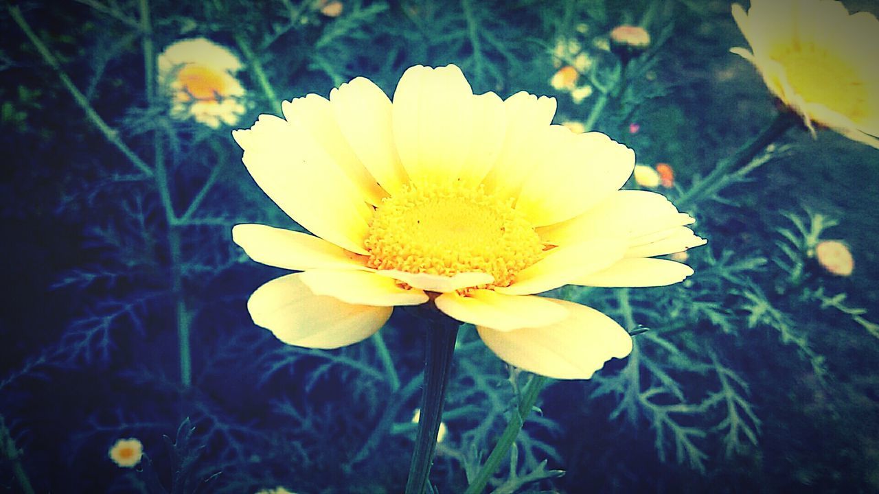 flower, petal, nature, beauty in nature, fragility, growth, flower head, freshness, plant, blooming, close-up, no people, yellow, outdoors, day