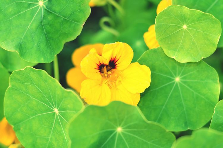 Insect Flower Freshness Petal Leaf One Animal Animal Themes Growth Close-up Fragility Animals In The Wild Yellow Wildlife Beauty In Nature Flower Head Nature Plant Green Color Blossom Day