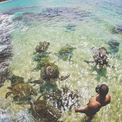 Maui Seaturtle Pacific Ocean