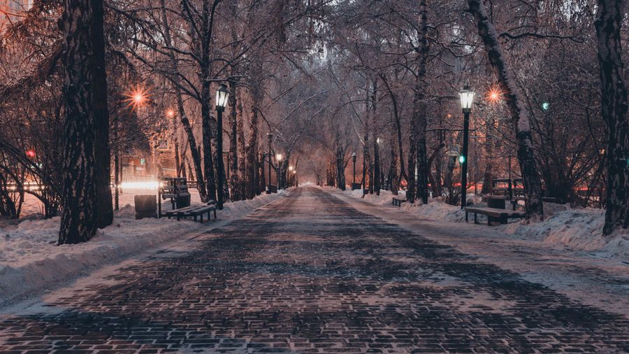 Street amidst trees during winter at night