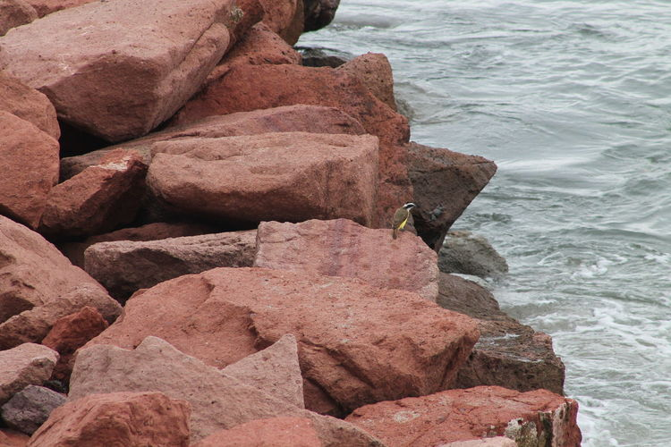 Vacation Bird Watching Beautiful Nature Beauty Of The Sea No People Just Nature On Vacation Enjoying Nature Pretty Yellow And Black Bird, Crab On Rock. Relax An Enjoy Rocks Leading Into The Sea