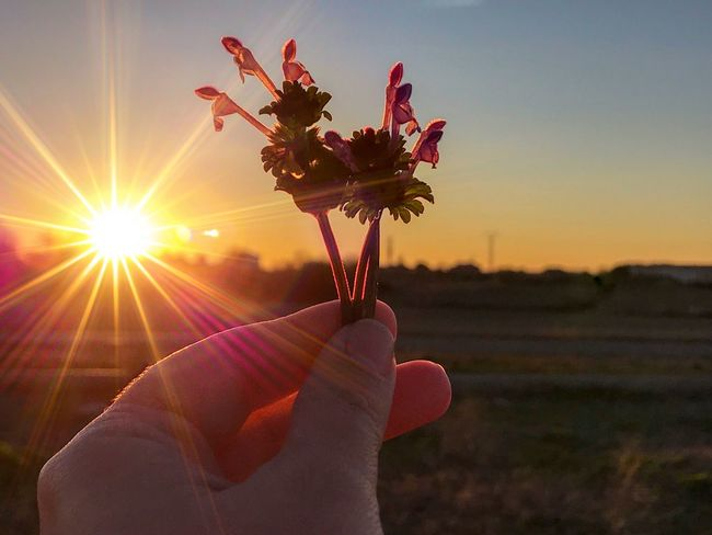 Simply for you ☺️❤️ For You ;-) Love Gift Floral Romanticism Romantic Bouquet Flowers Lamium Amplexicaule Lamium Henbit Deadnettle Henbit Sunset Environment Sunset Plant Nature Sunlight Lens Flare Flowering Plant Flower Sun Human Body Part Hand Human Hand Beauty In Nature Finger Sunbeam Human Finger Holding