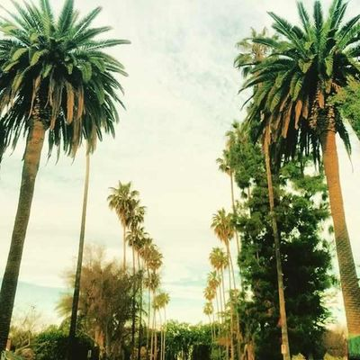 Sentinel Palm Trees
