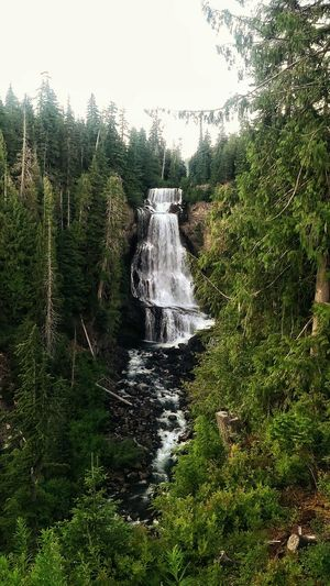 Alexander Falls Waterfall Whistler Whistler, B.C. British Columbia Canada The Great Outdoors - 2016 EyeEm Awards The Great Outdoors Summer Views Market Bestsellers 2016 Showcase July