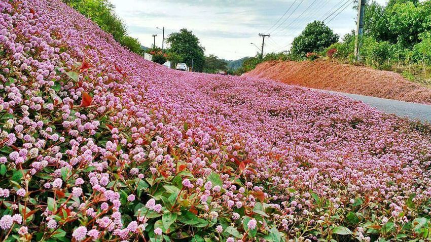 Agriculture Flower Beauty In Nature Plant Nature Photographic Memory Photo♡ Photo Rural Scene