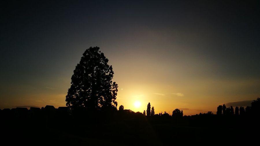 Epsom Sunset