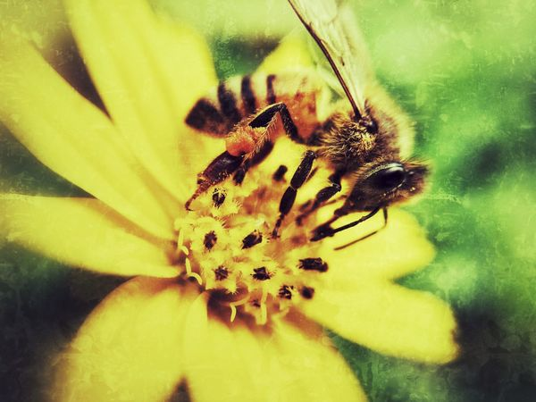 I'm working. Flower Insect Nature Beauty In Nature Flower Head Bee Working