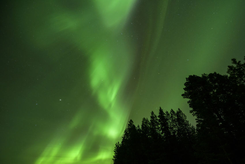 Planet Earth Sweden Aurora Borealis Aurora Auroraborealis Aurora Chasing Northern Lights Astronomy Tree Illuminated Star - Space Aurora Polaris Natural Phenomenon Sky Green Color Treetop Dramatic Sky