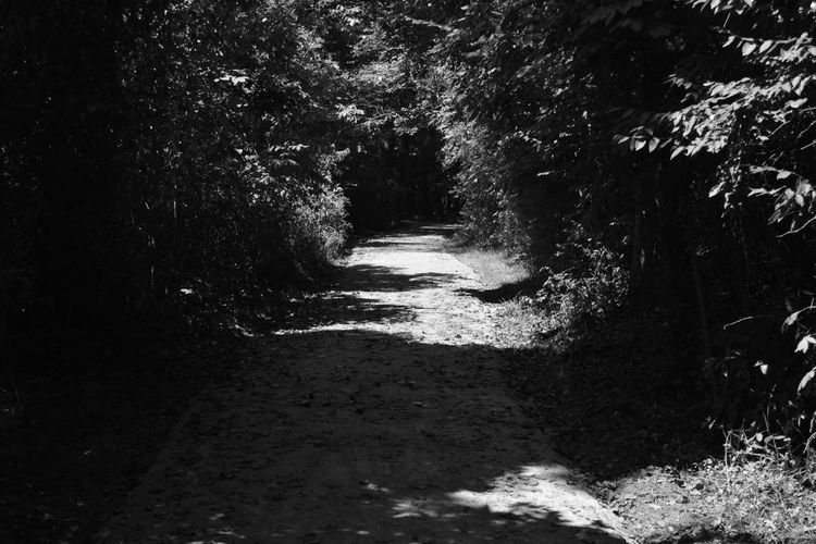 Dark Path Beauty In Nature Blackandwhite Day Forest Growth Landscape Monochrome Mystery Nature No People Outdoors Scenery Scenics The Way Forward Tranquil Scene Tranquility Tree Water