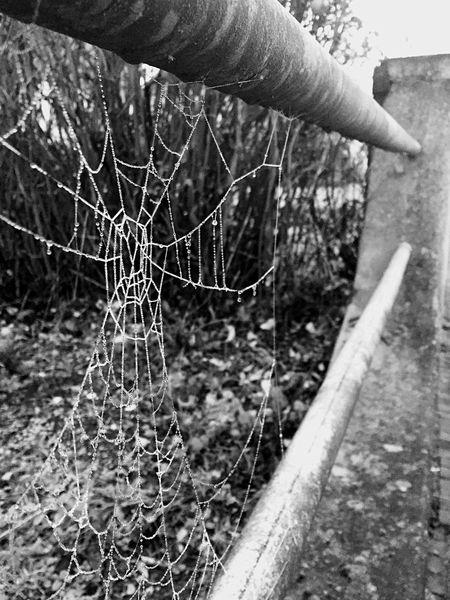 Close-up Spiderweb Cold Temperature Detail