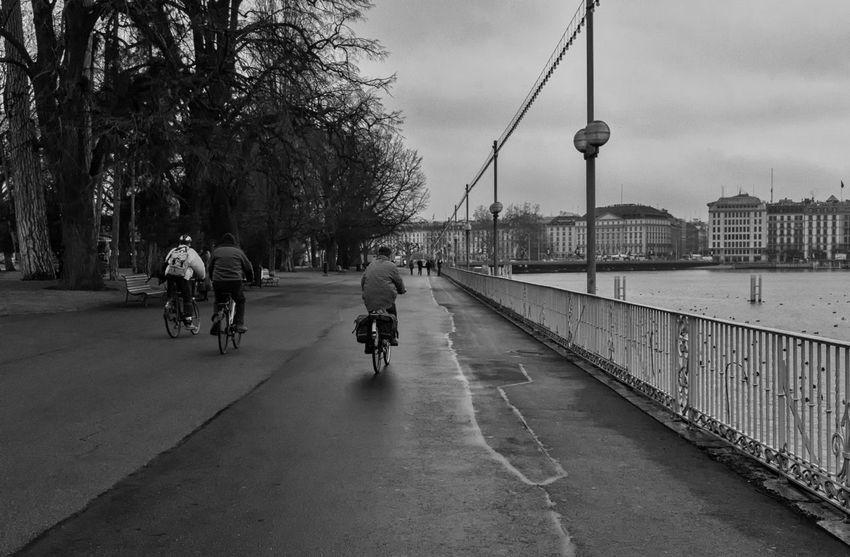 Winter Bike Ride Bike, Bicycle, Ride, Sport, Exercise, Walk, City City Life Cloud - Sky Day Diminishing Perspective Empty Footpath Geneva, Switzerland, Europe, European, Geneva Lake, Lake, Water, Seagulls, Birds, Mountains, Cloudy, Clouds Lifestyles Outdoors Road Sky Street Light The Way Forward Tree Vanishing Point Walkway