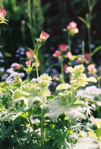 Plant Growth Nature Leaf Outdoors Flower Day Freshness Green Color No People Beauty In Nature Fragility Blooming Close-up Flower Head Film Photography Olympusom2sp