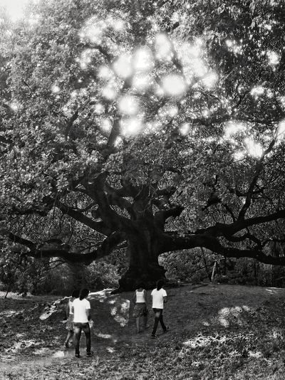Life Tree Outdoors Nature Real People Day Two People Men Standing Branch Lifestyles People Adults Only Adult Beauty In Nature Only Men Couple - Relationship Country Life Couple Black And White Mix Yourself A Good Time Your Ticket To Europe The Week On EyeEm EyeEmNewHere Oak Quercia Di Pinocchio Lost In The Landscape Connected By Travel Be. Ready. Black And White Friday