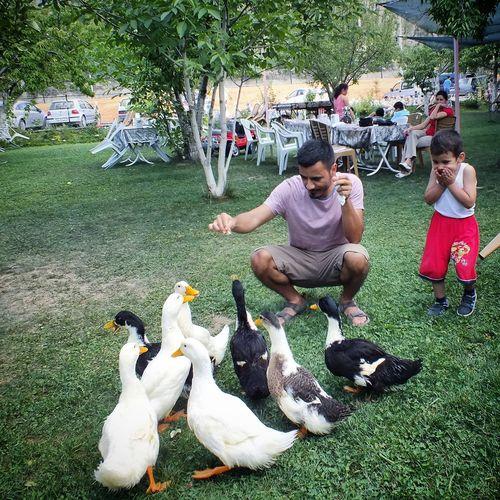 Feeding Ducks ördekleri Beslerken