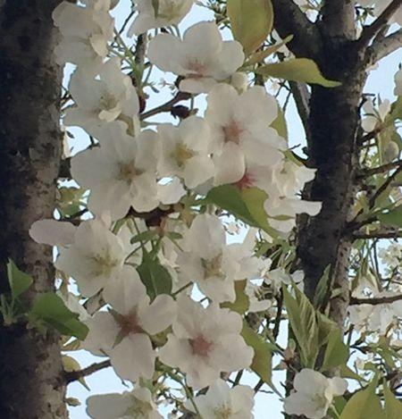 笑脸 ·花 卉