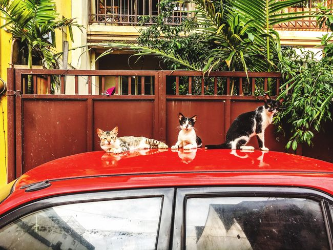 Cats Animal Themes Domestic Animals Domestic Cat Feline Eyeem Philippines
