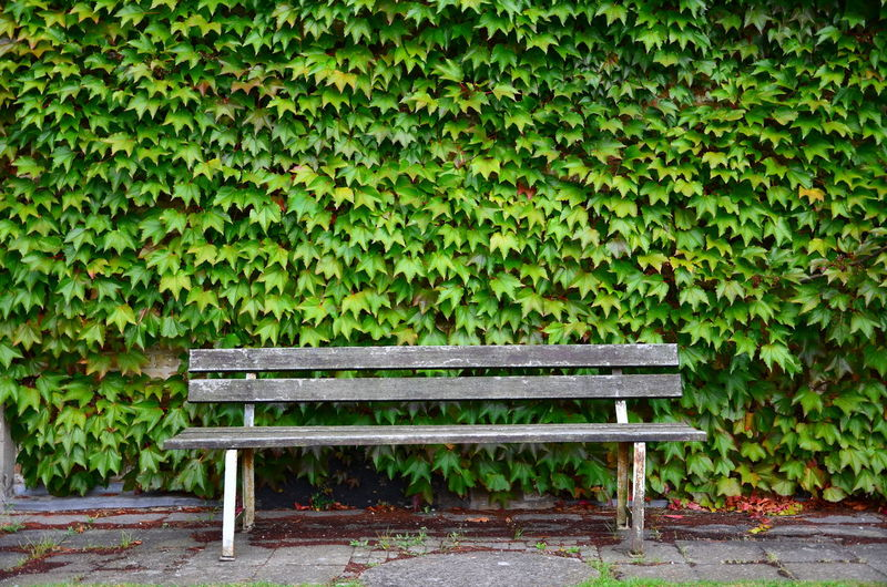 Mohammad Azouz Photography Beauty In Nature Bench Creeper Plant Day Green Color Growth Ivy Leaf Nature No People Outdoors Plant Wood - Material
