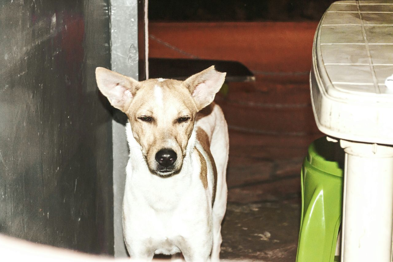 High angle view of stray dog by table