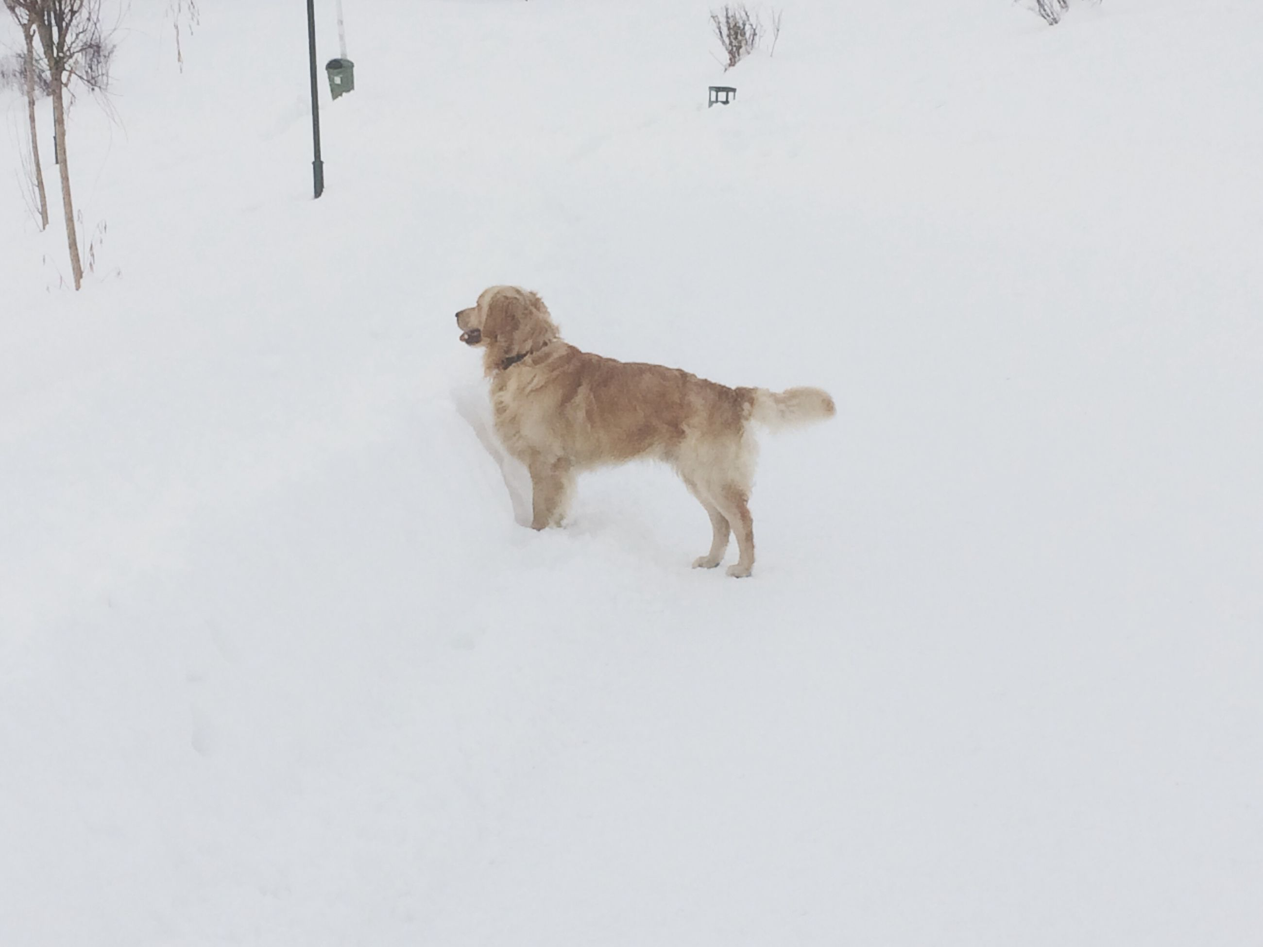 dog, domestic animals, mammal, animal themes, pets, weather, cold temperature, winter, snow, one animal, no people, nature, day, outdoors