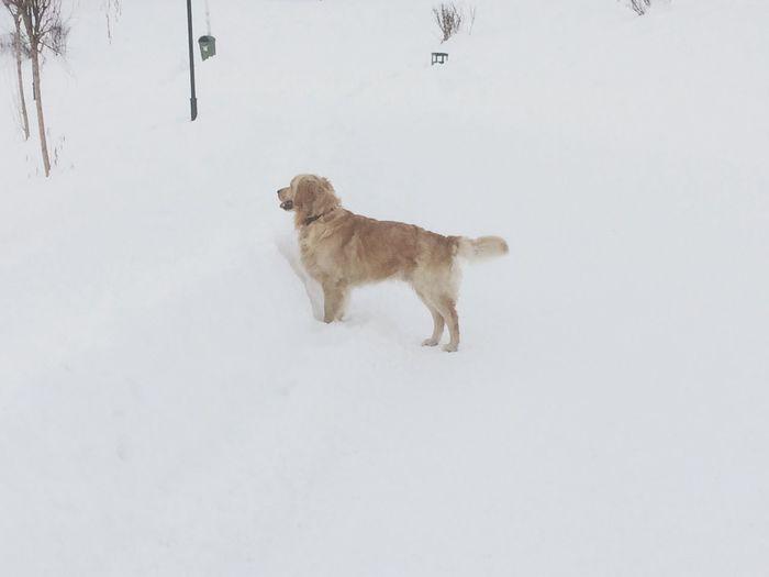 Dog Winter
