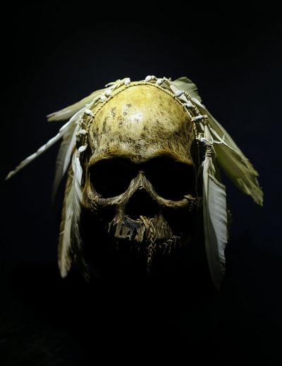 Close-up of animal skull against black background