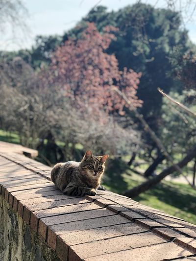 Besiktas Cat Travel Photography Travel Destinations Animal Animal Themes One Animal Animal Wildlife Mammal Focus On Foreground Animals In The Wild No People Day Nature Sunlight Plant Rock Relaxation Outdoors My Best Photo The Traveler - 2019 EyeEm Awards The Great Outdoors - 2019 EyeEm Awards The Mobile Photographer - 2019 EyeEm Awards