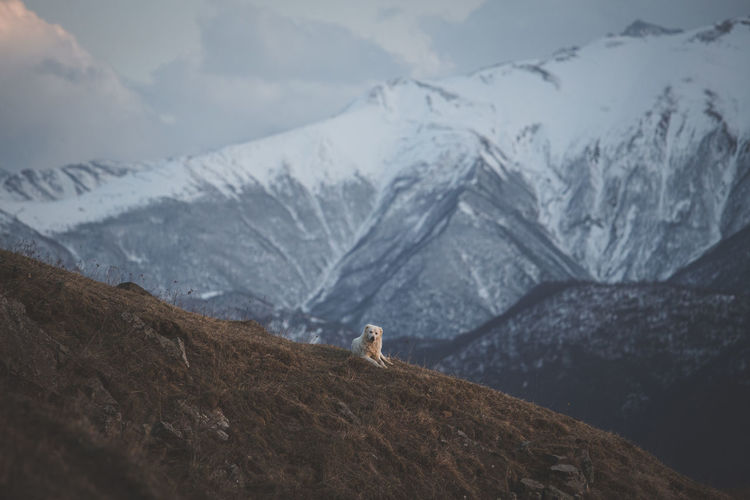Dog in the mountains