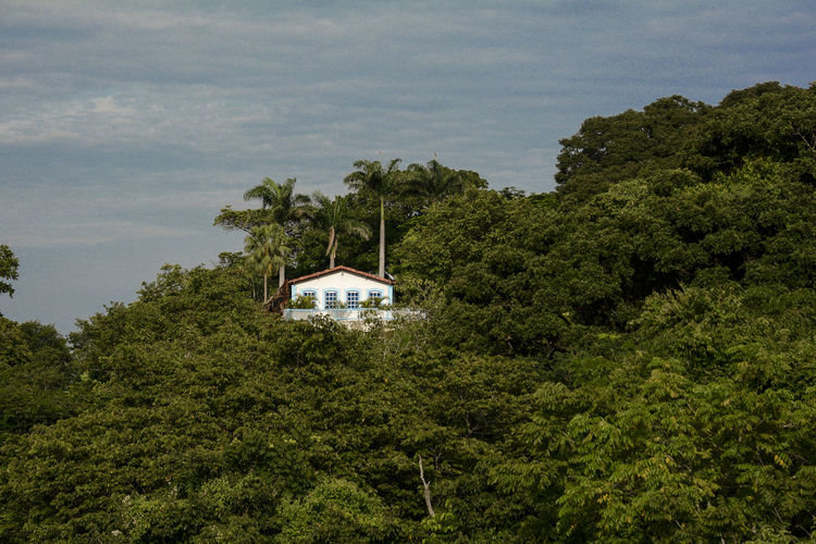 Cottage amidst trees against sky