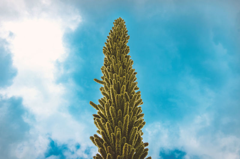Close-up of succulent plant against sky