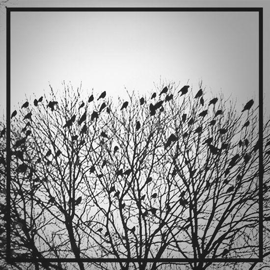 EyeEm Birds Tree