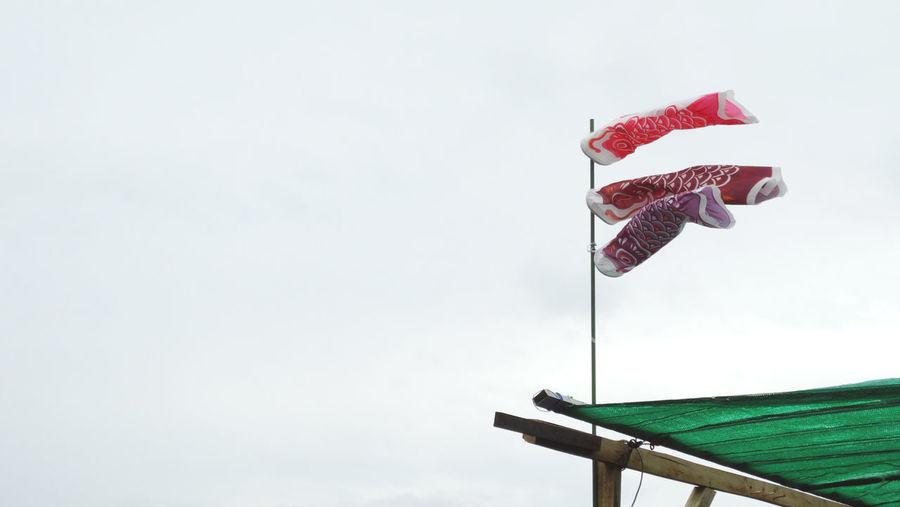 Low angle view of koi carp wind socks against sky