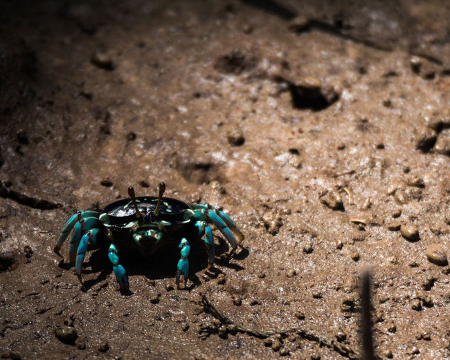 Beauty In Nature Blue Crab Day Focus On Foreground Landscape Leisure Activity Lifestyles Mangrove Crab Mangrove Forest Mangrove Life Nature Outdoors Rock - Object Selective Focus Small Crab Tranquility