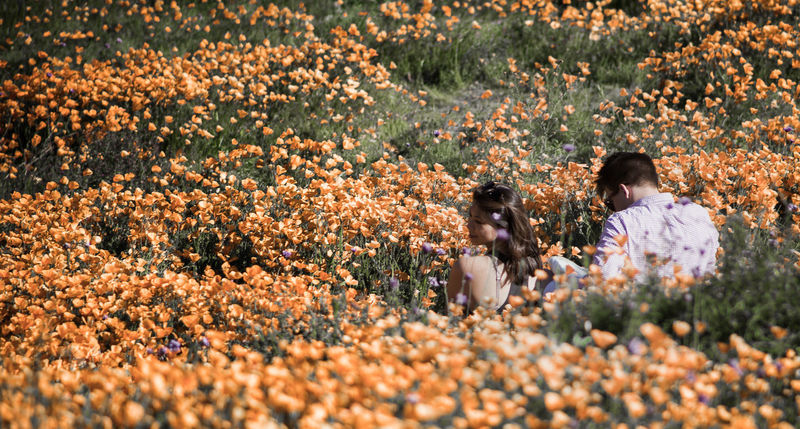 A meeting of possibilities.. https://youtu.be/kLfjhSmvFjM EyeEm Natue Lover California Poppies Poppy Field EyeEm Nature Lover Streamzoofamily Canonphotography Canon5Dmk3 EyeEm Best Shots - Nature California Dreaming Moodscapes Fields Of Gold Candid Photography EyeEmBestPics Togetherness Outdoors