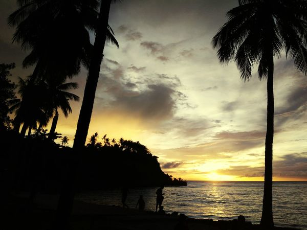 sunset EyeEmNewHere EyeEm Gallery EyeEm Selects EyeEm Nature Lover Eyee PhonePhotography Phoneography Phonecamera Coconut Palm Tree Tree Water Sea Palm Tree Sunset Beach Silhouette Sky Horizon Over Water Cloud - Sky Dramatic Sky Tropical Tree Moody Sky Power In Nature Coconut