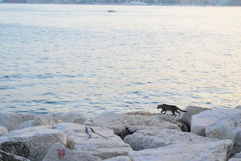 EyeEm Selects a cat that appreciates a good view Naples, Italy Naples Cat Cats Of EyeEm Cats In Random Places Candid Animal Animal Behavior